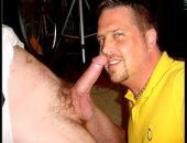cock hungry bear with a gautee slobbers a nice fatty