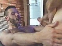 Hot bears spit hot fluids on hairy bods